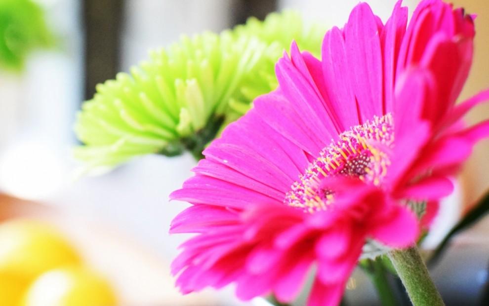 Bright Flowers Design Your Healthy Life(TM) for BarbaraFicarra.com