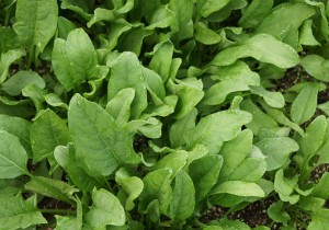 Glowing Skin BarbaraFicarra.com spinach